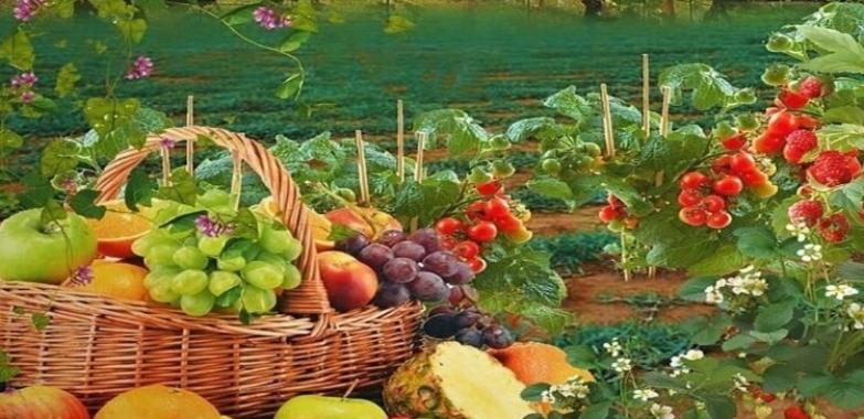 I prodotti del contadino sono più sicuri e genuini degli altri?